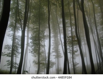 silhouettes of tall trees against glowing fog in the fall