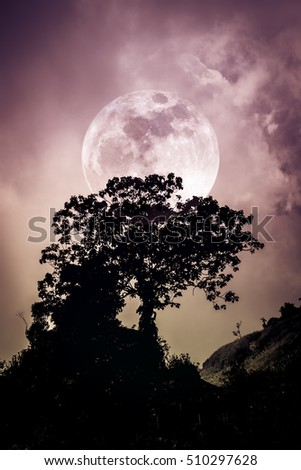 Blue Sky Full Moon But Not Blue Moon >> Silhouettes Tree Against Dark Blue Sky Stock Photo Edit Now