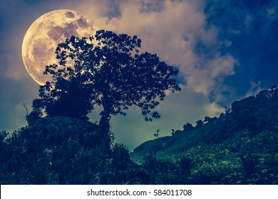 Silhouettes of tree with dark sky on tranquil nature background. Nighttime and super moon. Landscape in the evening, full moon behind trees. Cross process tone. The moon were NOT furnished by NASA.