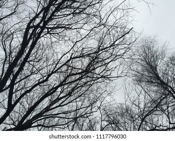 Silhouettes of trees