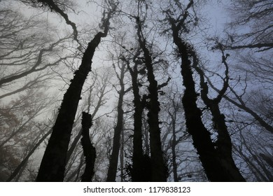 silhouettes of trees against the sky in a foggy autumn forest
