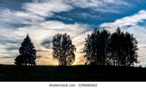 Silhouettes of trees against the sunset sky