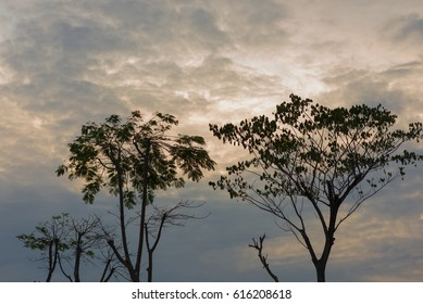 Silhouettes of the trees. Beautiful sunset sky