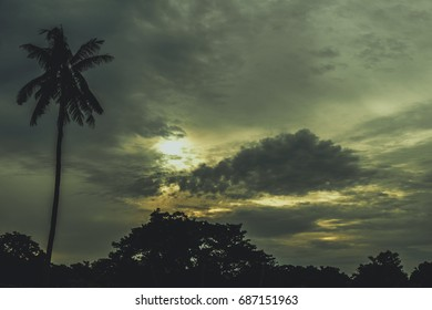 Silhouettes of the trees. Beautiful sunset sky, color and dark tone, nature background.