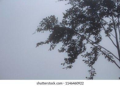 Silhouettes of trees in fog. The image is captured in the mountain called Sis of Trabzon city located in Black Sea region of Turkey.