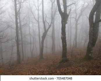 Silhouettes of trees in the fog. Mystical landscape of the autumn forest. A magical misty forest. Fallen leaves and bare branches of trees.