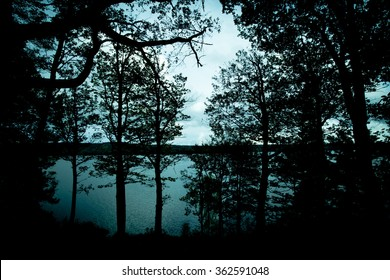 Silhouettes of trees next to a lake, Sweden