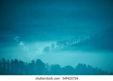 Silhouettes of trees on a hill in a chilly winter night covered in mist