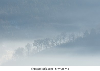 Silhouettes of trees on a hill in a chilly winter morning covered in mist