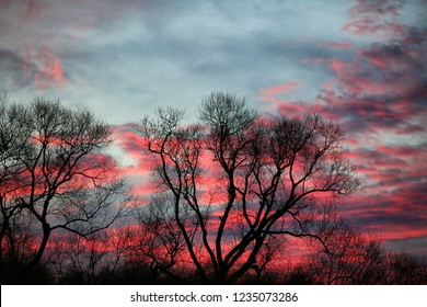 Silhouettes of trees and red clouds in the sky at sunset