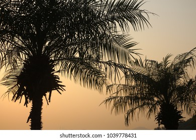 Silhouettes  of two palm trees against the warm orange sunset.