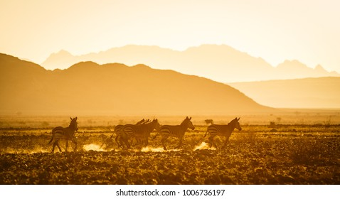 Silhouettes of zebras in setting african sun