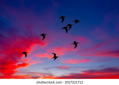 Silhoutte of birds flying in formation with dramatic clouds at sunset in thailand
