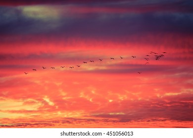 Silhoutte of birds flying in formation with dramatic clouds at sunset