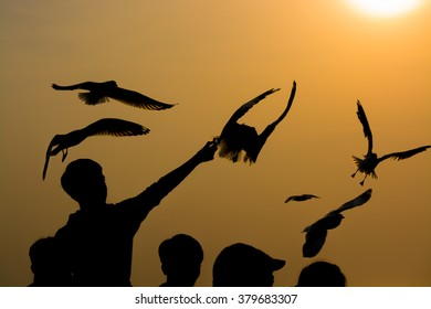 Silhoutte of migratory seagulls at Bangpu seaside town in Thailand.