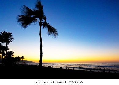 Silhoutte of palm trees at sunset on the north shore of Oahu, Hawaii in Haleiwa