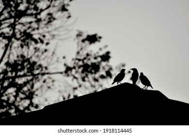 silhoutte photo a three birds standing on a rooftop