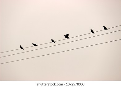 Silhuetts of birds sitting on cords in the cloudy grey sky. Monochrome colors. Minimalism. Concept for card or interior picture, modern simple style, nature theme