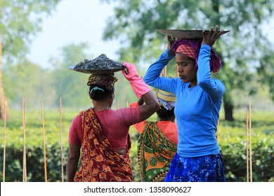 SILIGURI, INDIA -DEC 01 : Unidentified women construction workers carry cement in steel bowls on their head on December 01, 2018 in Siliguri, West Bengal,India.