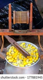 Silk Production Process, making of the cocoon silkworm from egg to worm.