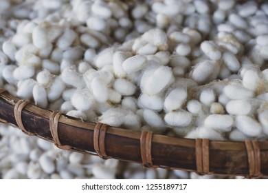 silkworm cocoon, silkworm cocoon background