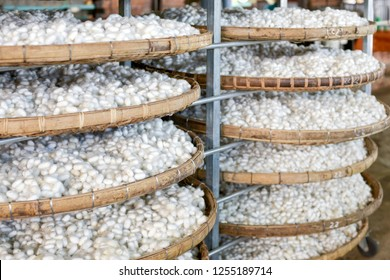 silkworm cocoon, background of silkworm cocoons in a factory on racks