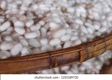 silkworm cocoon, cocoons in a silk factory
