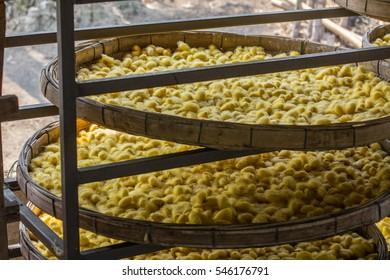 silkworm cocoon in threshing basket