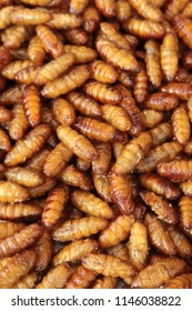 Silkworm pupa fried, delicious food