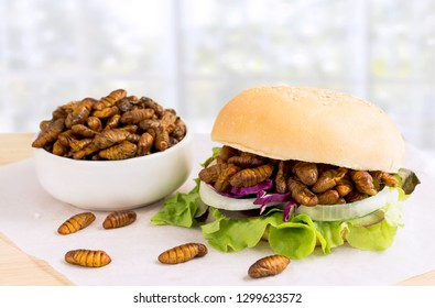 Silkworm Pupae (Bombyx Mori). Food insects, for eating as food items in bread burger with vegetable on wooden table, it is good source of protein edible for future. Entomophagy concept.