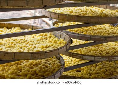 Silkworms cocoon in threshing basket