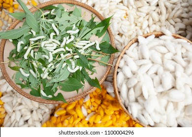 Silkworms feed on mulberry leaves and white worm cocoons on the bamboo basket. White and golden worm cocoons backgrounds, the first stage of silk production at Sakon Nakhon, Thailand. Selective focus.