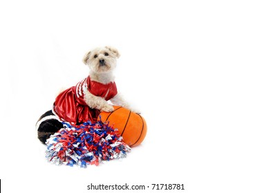 Silky Poo, dressed in a cheerleaders uniform, cheers from the sidelines.  She is holding a basketball and sitting on a football.