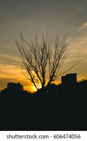 Sillhouette Photography