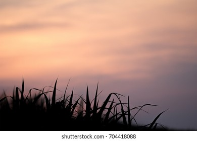sillhoutte view at the grass field when sunset