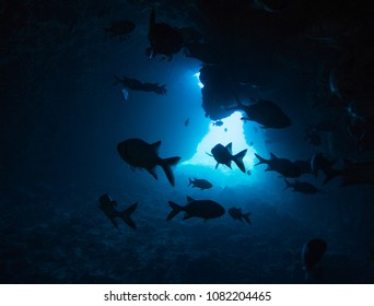 Sillouetted fish of Lanai