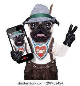 silly crazy  pug dog dressed up as bavarian with gingerbread as collar, isolated on white background, and victory or peace fingers, surprised or shocked, taking a selfie with smartphone telephone