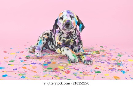 Silly Dalmatian  puppy that is smiling about her art work, on a pink background.