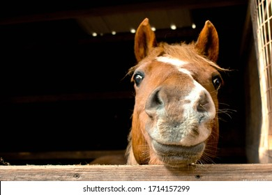 Silly Horse Looking at Me