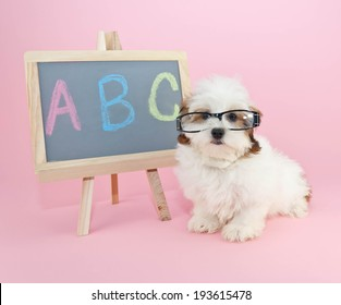 Silly puppy wearing glasses sitting beside a chalkboard with A,B,C, wrote on it.
