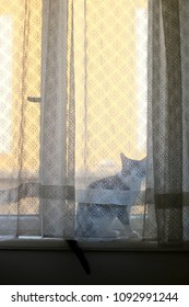 Silly six month old kitten hiding behind a lace curtain. Selective focus.