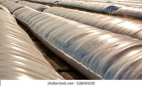 Silo bag in a farm with fence and field. Rural, countryside image, agricultural industry scene.