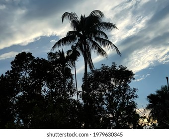 Silohuette of a coconut tree along with other neighboring trees against clouded yet blue sky