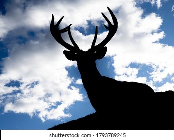 silohuette of male red Deer portrait close up, portrait in dolomites