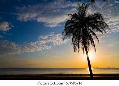 Siluate coconut tree on the beach before sunset background