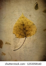 Silver Birch Leaf in Autumn on a Calico Background. Aged Digital Effect using several photographic layers.