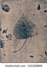 Silver Birch Leaf on calico fabric. Digital Layers, and Cynotype filter effect.