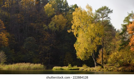 A silver birch tree catches the light of an autum afternoon on the edge of a lake in the middle of a forest. Photograph taken near Vilnius, Lithuania.