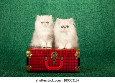 Silver Chinchilla kitten sitting on top of red plaid tartan check suitcase luggage on light green background