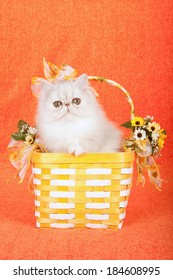 Silver Chinchilla kitten sitting in yellow and white basket decorated with ribbon and bows and yellow sunflowers on orange background